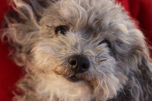 Dog, Animal, Mammal, Portrait, Cute, Pet, Puppy