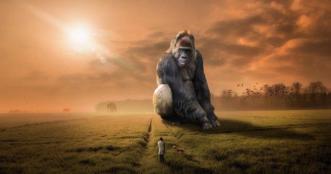 Animal, Gorilla, Ape, Primate, Herbivore, Silver Back