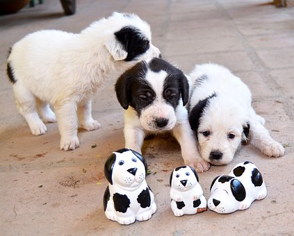 Puppy, Dog, Can