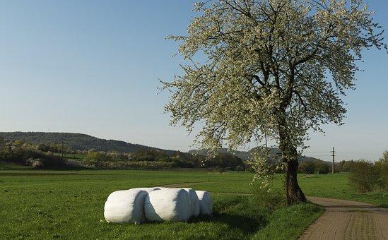 Tree, Bale, Flowers, Meadow, Lane, Sky, Mountainous
