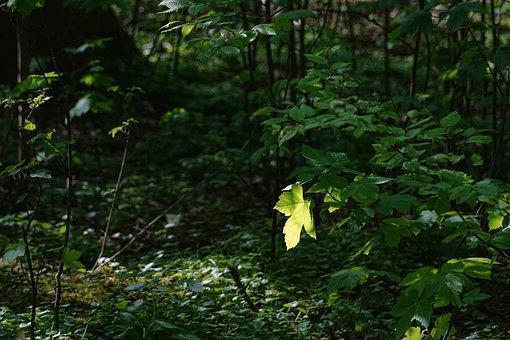 Leaf, Wood, Tree, Nature, Spring, Back Light, Plant