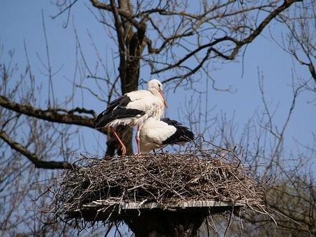Stork, Nest, Pair, Young, Bird, Nature, Animal World