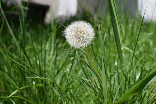 Nature, Lawn, Plant, Summer, Henar, Flower, Outdoors