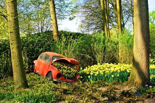 Volkswagen Beetlle, Volkswagen, Car Wreck