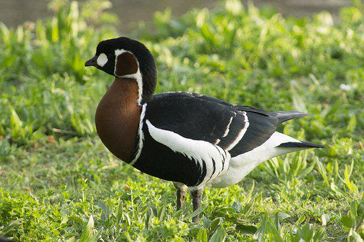 Wildlife, Nature, Animal, Bird, Outdoors