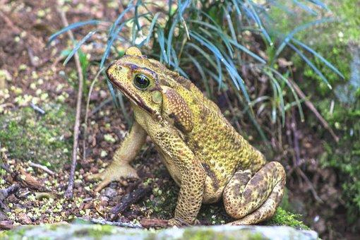 Frog, Nature, Wildlife, Animalia, Amphibian, Outdoors