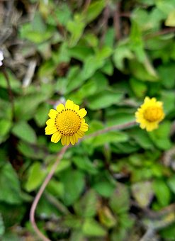 Tiny, Yellow, Flower, Closeup, Nature, Floral, Summer