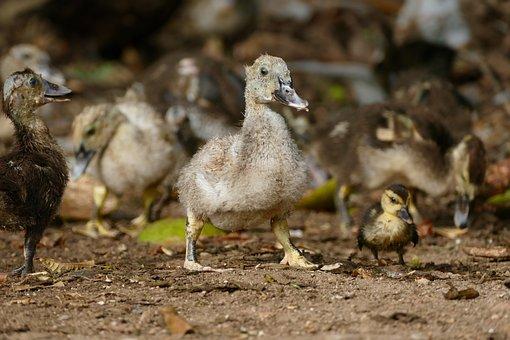 Animal World, Animal, Bird, Chicks, Young Birds