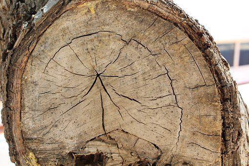 Nature, Tree, Tribe, Bark, Chop Wood, Live, Drawn, Age