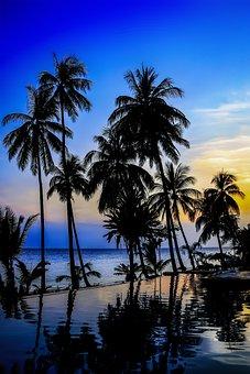 Palm, Beach, Tropical, Seashore, Sunset, Dusk, Summer
