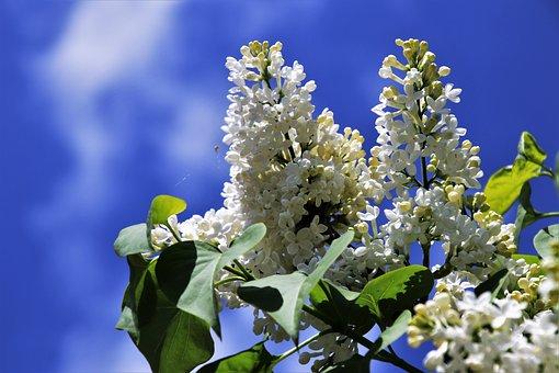 Without, Biel, Spring, Sky, Flower, Nature, Plant