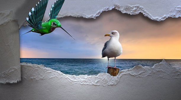 Seagull, Hummingbird, Sea, Breakthrough, Bird