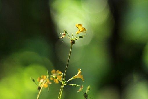 Nature, Leaf, Outdoors, Flora, Flower, Blur, Growth