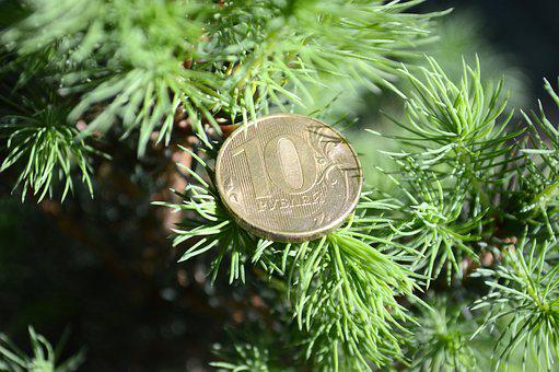 Tree, Plant, Pine, Nature, Branch, Ruble, Coins