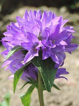 Flower, Nature, Flora, Garden, Blooming, Closeup