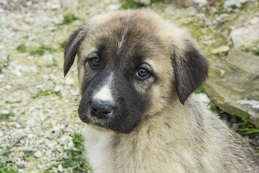 Animals, Dog, Cute, Pets, Portrait