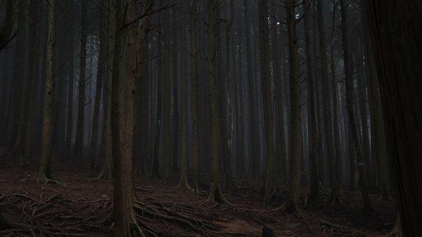 Dark, Wood, Nature