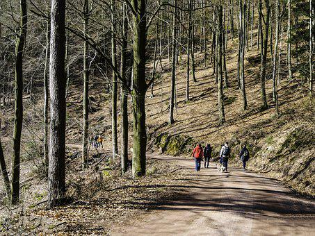 Hiking, Family, Group, Forest, Palatinate Forest, Hike