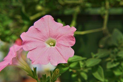 Nature, Flora, Flower, Garden, Summer
