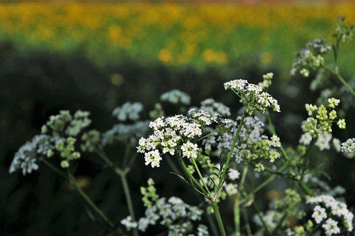 Spring, Field, Flower, Plant, Nature, Season, Lawn