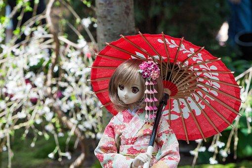 Flower, Nature, Tree, Kimono, Umbrella, Traditional