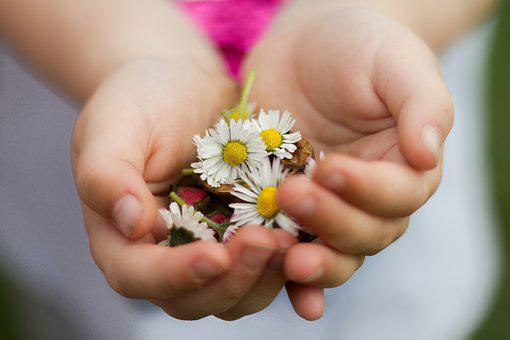 Nature, Hand, Small, Flowers, Child, Love, Human, Daisy