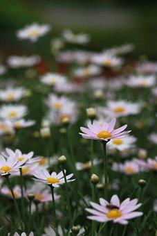 Flowers, Nature, Plants, S, Hayfields, Wildflower, Wild