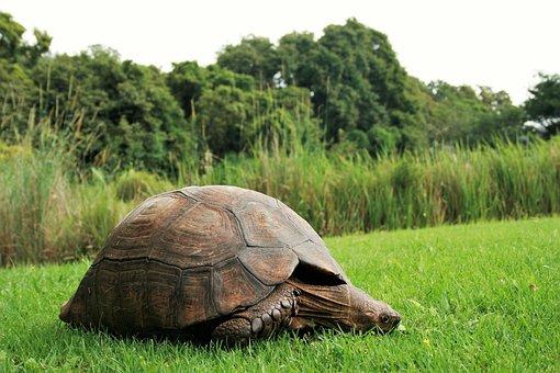 Nature, Grass, Animal, Wildlife, Environment