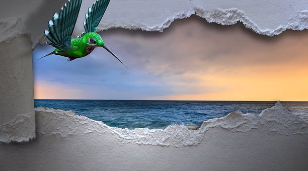 Hummingbird, Sea, Breakthrough, Bird, Longing