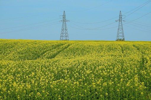 Canola Field, Sky, Landscape