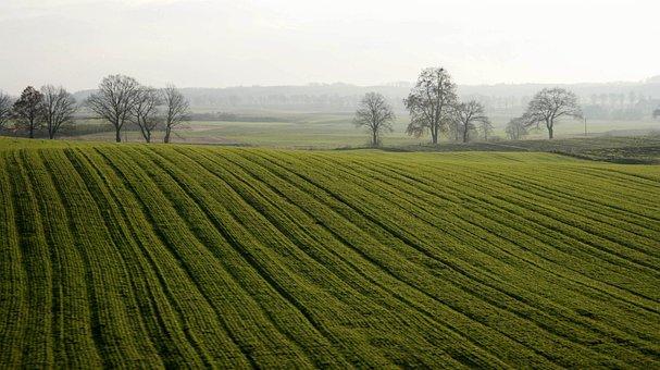 Nature, Field, Landscape, Panoramic, Farm