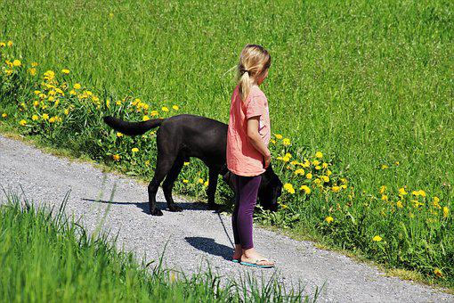 Spring, Spacer, Dog, The Little Girl, Total, Lawn