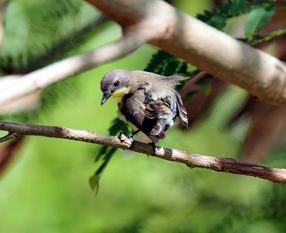 Bird, Wildlife, Animal, Nature, Tree, Outdoors, Little