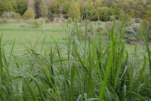 Grass, Meadow, Green, Landscape, Grass Meadow, Spring