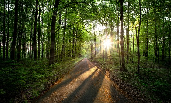 Morning, Morgenstimmung, Forest, Sunrise, Landscape