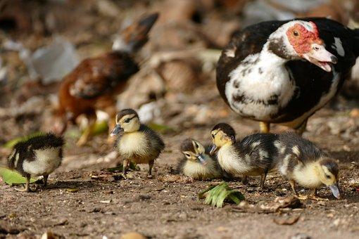 Bird, Nature, Animal World, Animal, Feather, Small