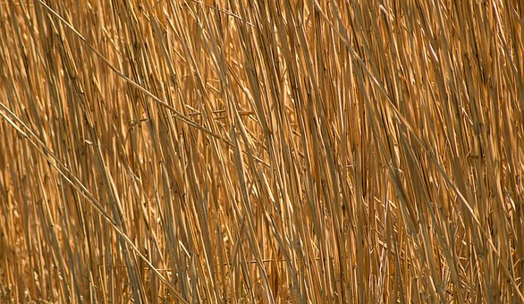Background, Straw, Golden, Pattern, Nature, Dry, Field