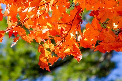 Leaf, Nature, Fall, Season, Tree
