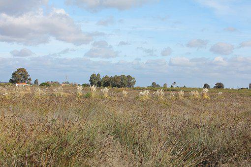 Landscape, Lawn, Nature, Field