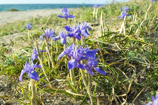 Nature, Flower, Plant, Outdoors, Summer, Garden, Sun