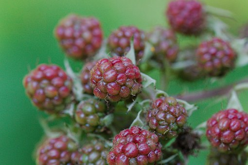 Fruit, Nature, Food, Berry, Summer, Plant, Healthy