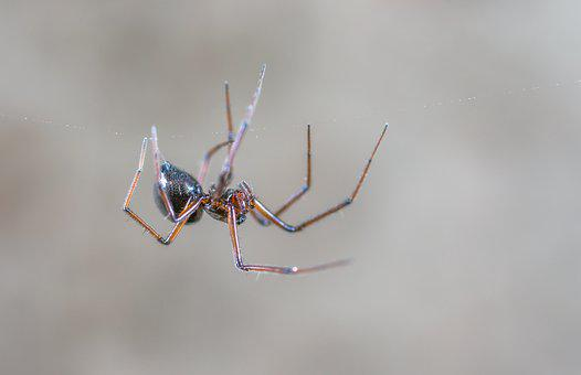 Spider, Living Nature, Nature, Animals, Arachnids