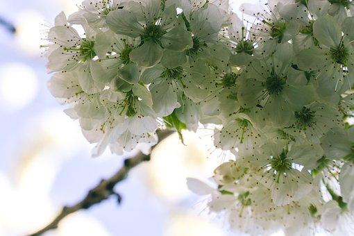 Flower, Plant, Nature, Petal, Tree