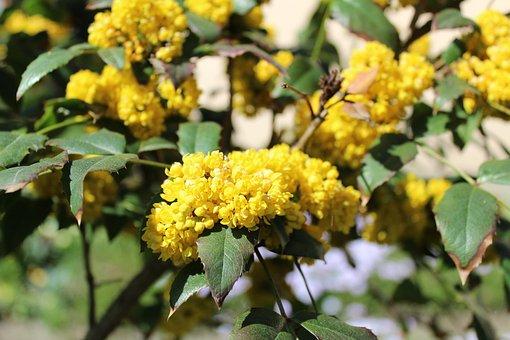 Plant, Flower, Nature, Leaf, Tree