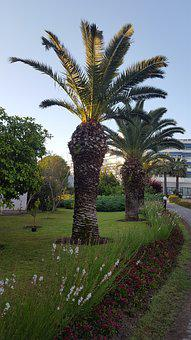 Nature, Tree, No One, Summer, Outdoor, Plant, Tropical