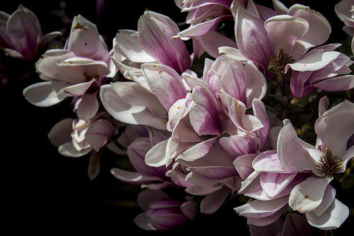 Flower, Plant, Nature, Petal, Garden, Floral, Flowers