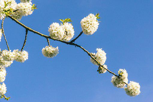 Branch, Plant, Flower, Nature, Tree, Flowers