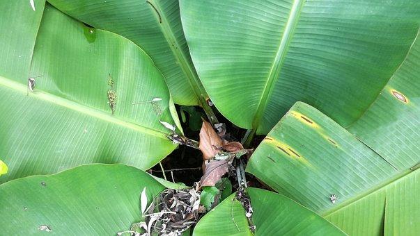 Leaf, Plant, Nature, Environment