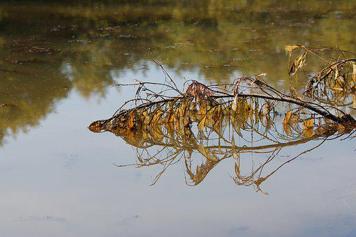 Nature, Waters, Puddle, Reflection, Animal, Lake, River