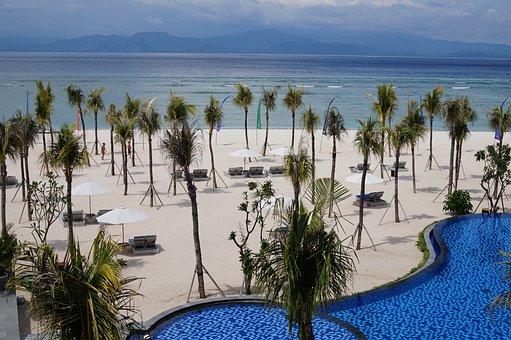 Beach, Seashore, Water, Tropical, Tree, Vacation